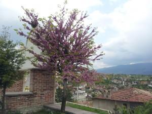 22 Nisan 2013 Sehir Muzesi, Safranbolu, Karabuk -01-