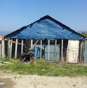 27 Nisan 2013 Espiye, Giresun -1-