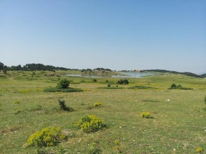13 Temmuz 2013 - Kirkpinar Yaylasi, Cankiri -01-