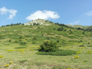 13 Temmuz 2013 - Kirkpinar Yaylasi, Cankiri -02-