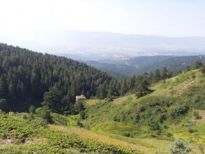 14 Temmuz 2013 - Kirkpinar Yaylasi, Cankiri -06-