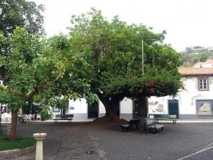 18 Eylul 2013 - Santa Cruz, Madeira -2-