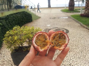 Passion Fruit, Maracuja, Passiflora edulis, Santa Cruz, Madeira