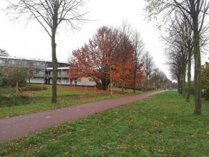 24 Kasim 2013, Hengelo, Hollanda -05-