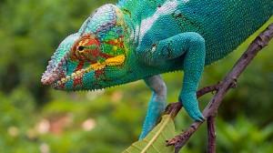 BBC Madagascar 001
