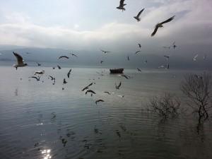 9 Subat 2015, Golyazi, Bursa -01-