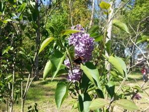 24 Nisan 2015, Karaca Arboretumu, Yalova -05-