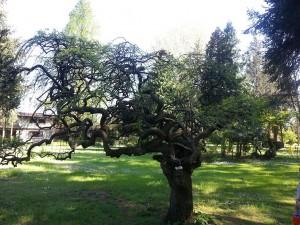 24 Nisan 2015, Karaca Arboretumu, Yalova -06-