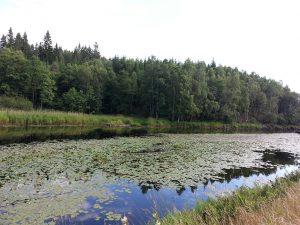 24 Temmuz 2016 - Rydboholm, Boras, Isvec -02-