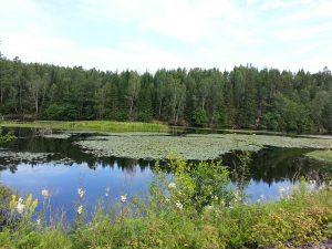 24 Temmuz 2016 - Viskafors, Boras, Isvec -01-