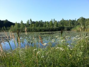 25 Temmuz 2016 - Rydboholm, Boras, Isvec -01-